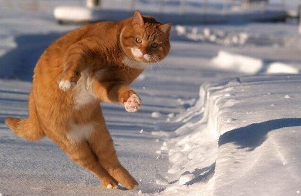猫が飛び退く