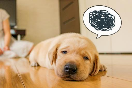 しょぼくれる犬