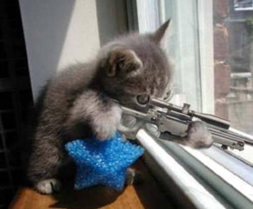 ライフルを構える子猫